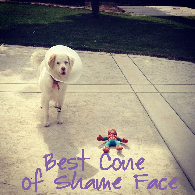 Best Cone of Shame Face